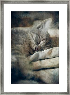 Kitten's Sweet Dream #01 Framed Print