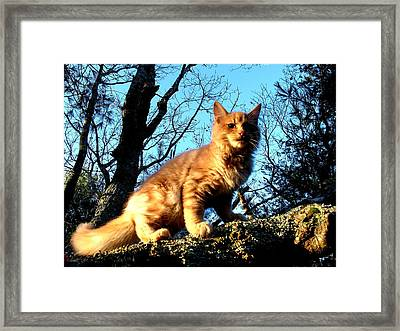 Kittery Cat Framed Print by Donnie Freeman