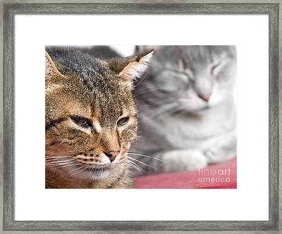 Kitties Again Framed Print