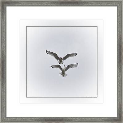 Kittiwakes Dancing In The Air Framed Print by Heiko Koehrer-Wagner