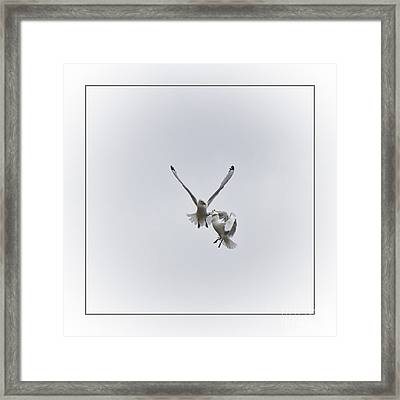Kittiwakes Flight Framed Print by Heiko Koehrer-Wagner