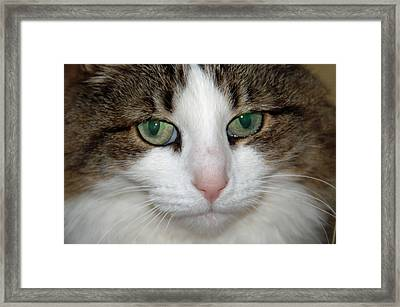Kitty Framed Print by Aimee L Maher Photography and Art Visit ALMGallerydotcom