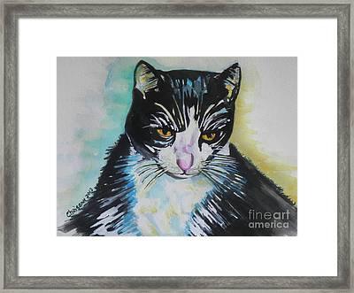 Kitty ..all Grown Up Framed Print by Chrisann Ellis