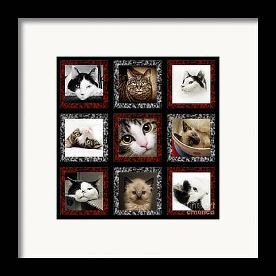 Andee Design Puss Framed Prints