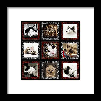 Andee Design White Framed Prints