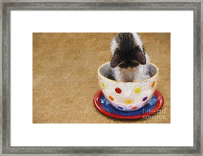 Kitty Cat Time Out Framed Print