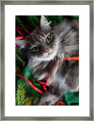 Kitty Christmas Card Framed Print