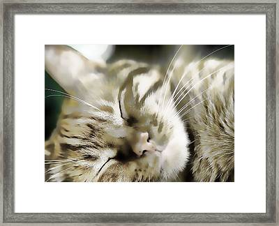 Kitty Dreams Framed Print by Don Bendickson