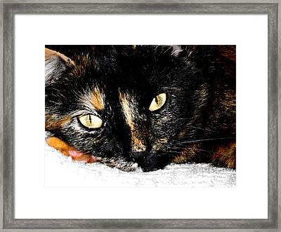 Kitty Face Framed Print