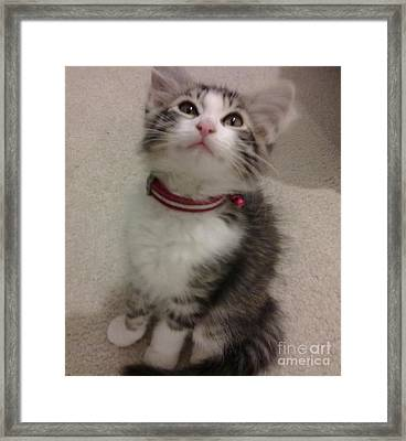 Kitty - Forgotten Innocence Framed Print by Barbara Yearty