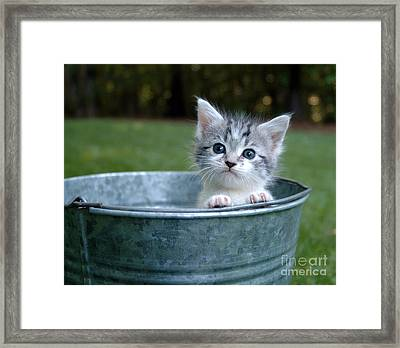 Kitty In A Bucket Framed Print by Jt PhotoDesign