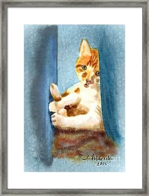 Kitty In A Corner Framed Print