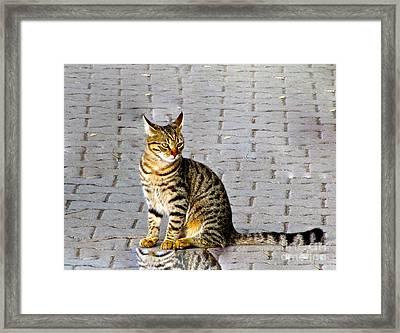 Kitty In Sevastopol Russia Framed Print