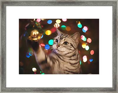Kitty In The Lights Framed Print by April Reppucci