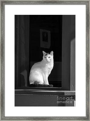 Kitty In The Window Framed Print
