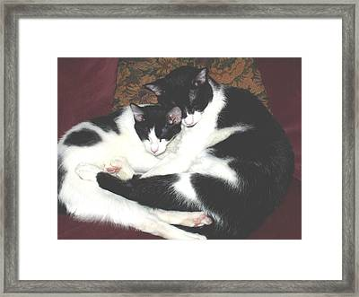 Kitty Love Framed Print by Marna Edwards Flavell