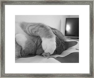 Kitty Naps Framed Print by Emily Schmidt