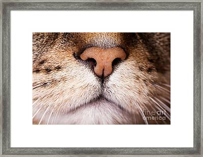 Kitty Nose  Framed Print by Sharon Dominick