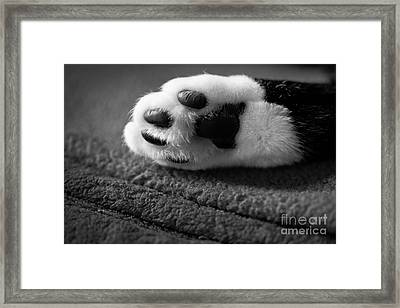 Kitty Paw Close Up Framed Print by Sharon Dominick
