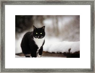 Kitty Snow Play Framed Print by Melanie Lankford Photography