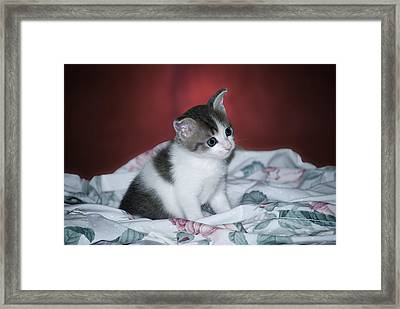 Kitty Taking A Moment To Chill Framed Print by Thomas Woolworth