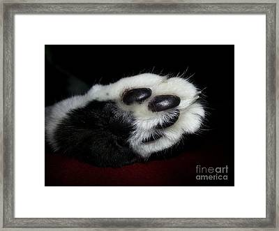 Kitty Toe Beans Framed Print by Heather L Wright