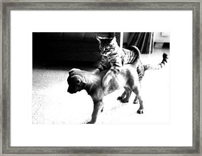 Kitty's Marching Band Framed Print by Robert  Rodvik