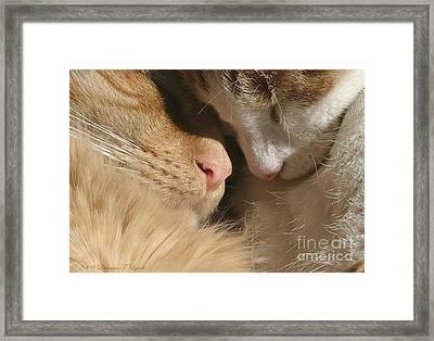 Kity Kat Love Framed Print
