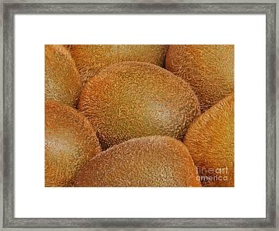 Kiwi Fruit Framed Print by Marv Vandehey