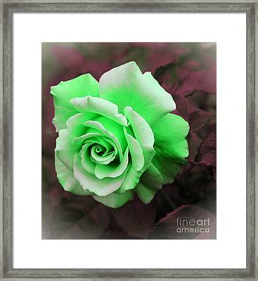 Kiwi Lime Rose Framed Print by Barbara Griffin