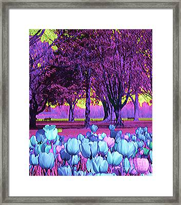 Kiwi Sky With Tulips Framed Print by Ann Johndro-Collins