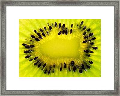 Framed Print featuring the photograph Kiwi Sunflower by Chris Fraser