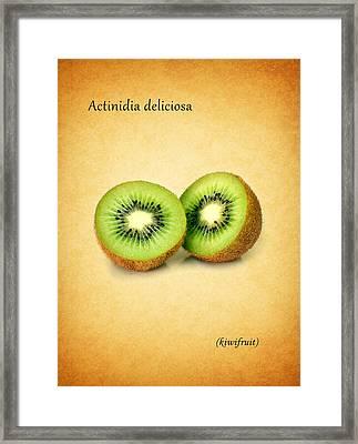 Kiwifruit Framed Print by Mark Rogan