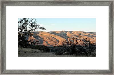Klickitat Rose Framed Print