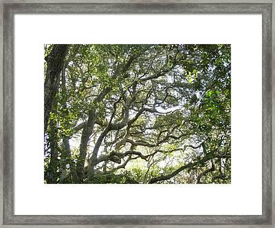 Knarly Oak Framed Print