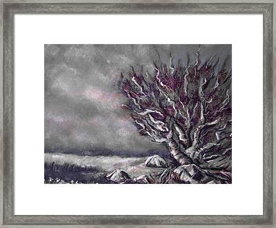 Knarly Tree Framed Print by Jon Shepodd
