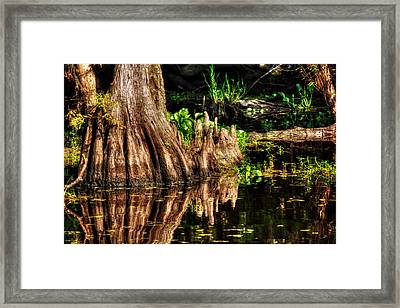 Knees Deep In A Louisiana Bayou Framed Print by Chrystal Mimbs