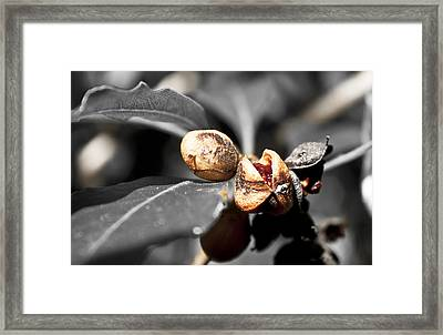 Framed Print featuring the photograph Knew Seeds Of Complentation by Miroslava Jurcik