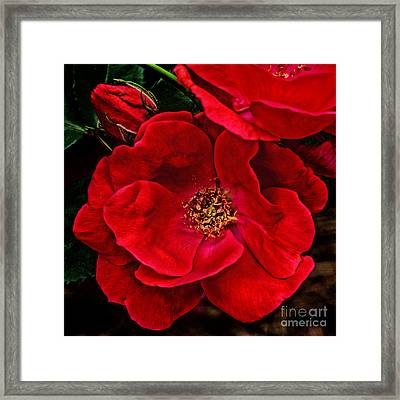 Knockout Red Framed Print