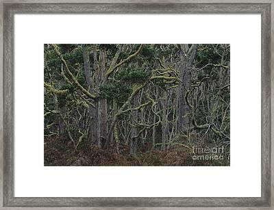 Koa Forest Framed Print