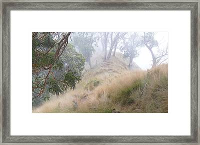 Misty Koa Ridge  Framed Print