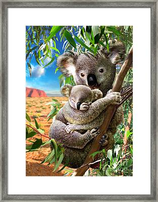 Koala And Cub Framed Print by Adrian Chesterman