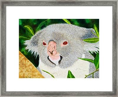 Koala Framed Print by April Moseley