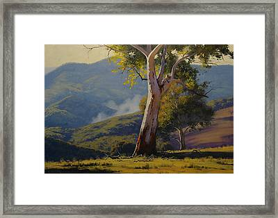 Koala In The Tree Framed Print by Graham Gercken