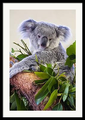 Koala Digital Art Framed Prints