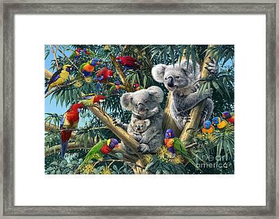 Koala Outback Framed Print by Steve Read