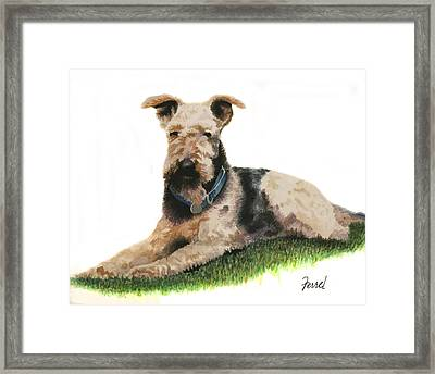 Framed Print featuring the painting Kobe Airedale Terrier by Ferrel Cordle
