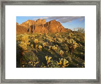 Kofa Mountain Framed Print by Tim Fitzharris