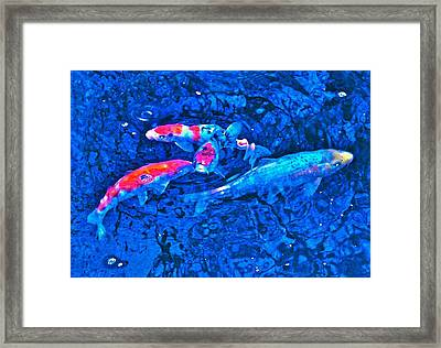 Framed Print featuring the photograph Koi 2 by Pamela Cooper
