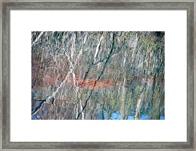 Koi Among The Birch Framed Print